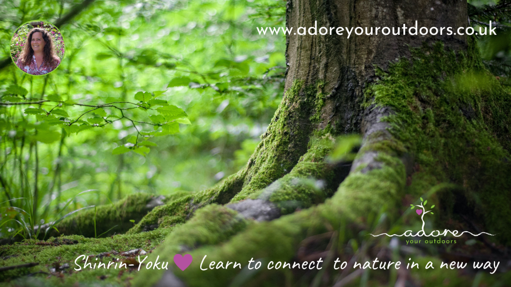 Tree trunk covered in rich, damp moss with Adore Your Outdoors logo