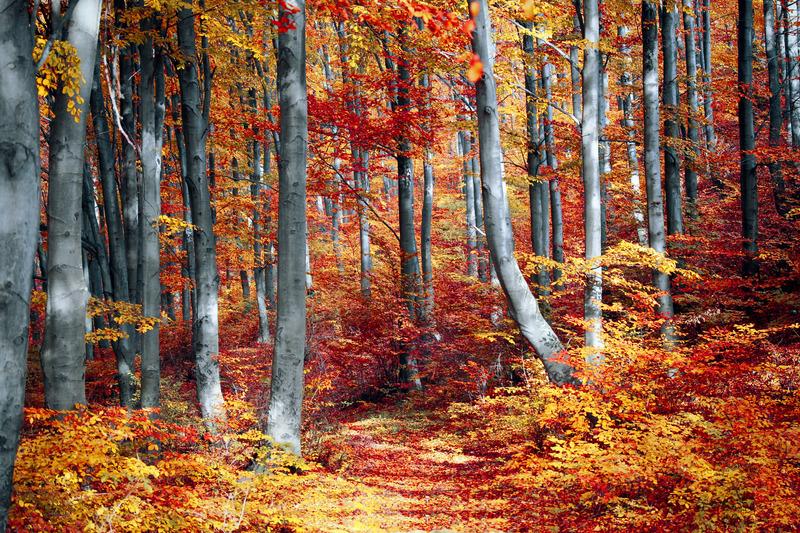 Autumnal forest scene