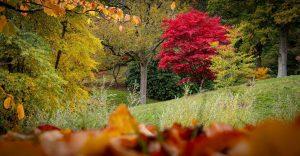 Autumnal countryside scene
