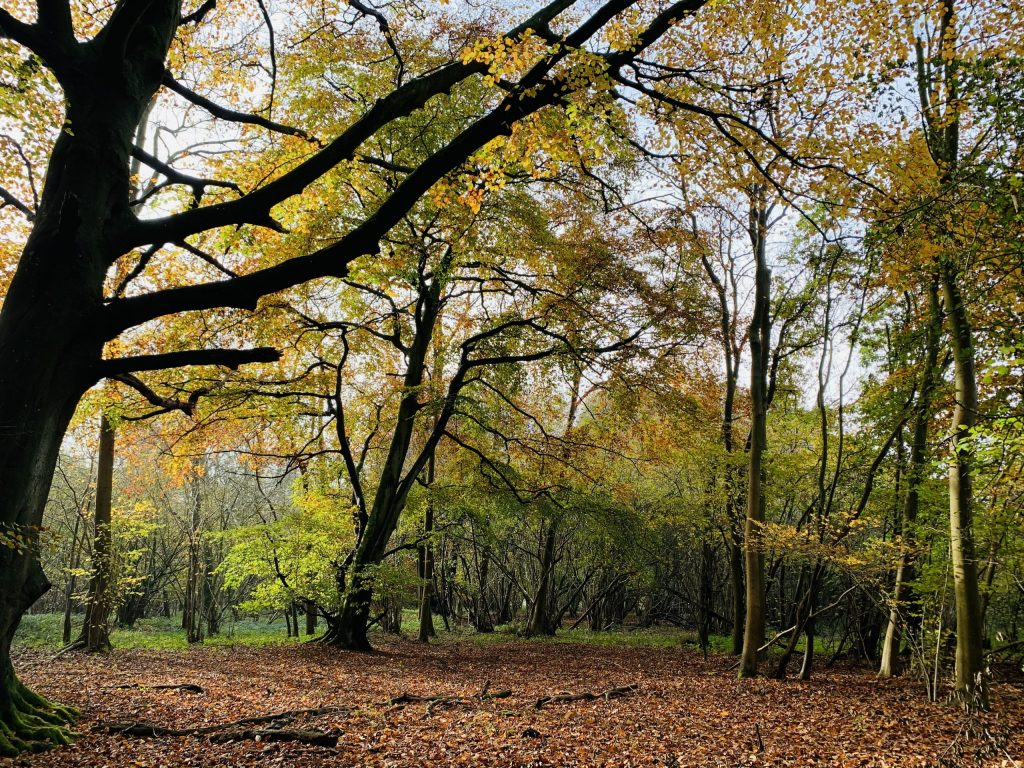 The beech clearing where I work