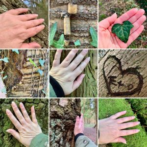 Photo showing hands and compassion for nature