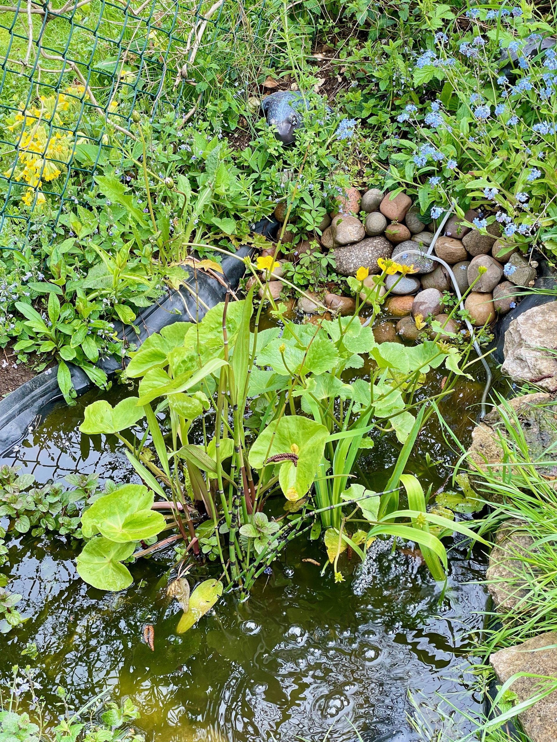 Our little lockdown pond is teeming with life