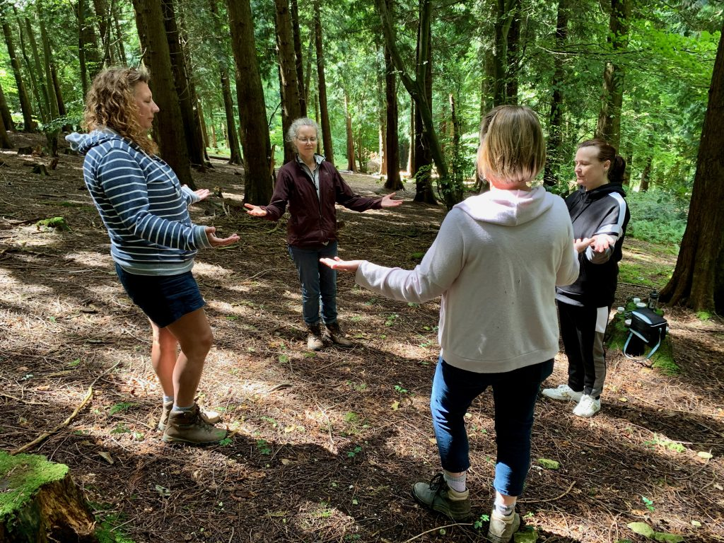Group Forest Bathing in Winchester
