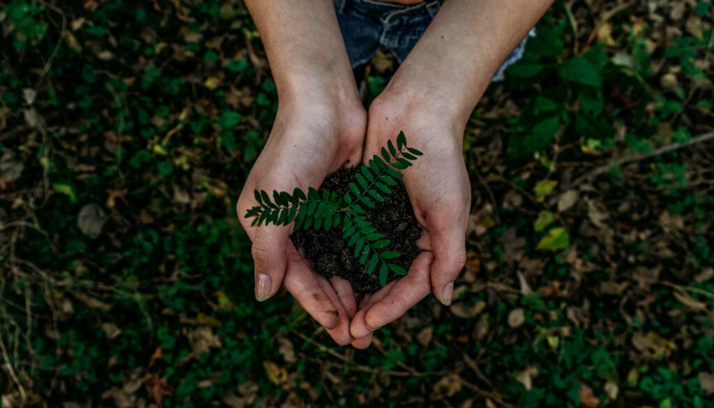 hands holding earth and new shoot growing